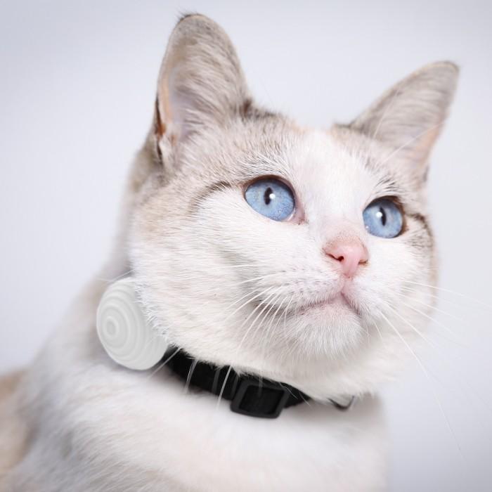 Stress, comportement chat - Tracker d'activité Canhe-Fit Light pour chats