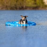 Bateau pour chien -  Bateau pneumatique Blue Paw Trixie