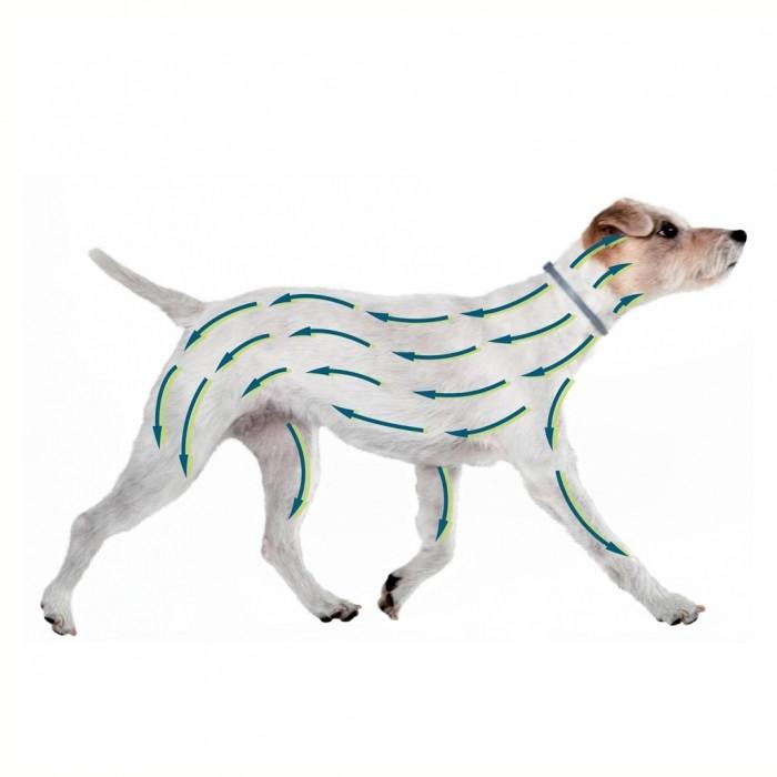 Tiques, puces & vers - Collier Seresto pour chiens
