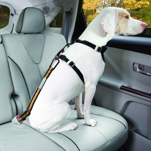 Transport du chien - Attache voiture Tether pour chiens