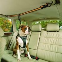 Accessoires auto pour chien - Tyrolienne Auto Zipline  Kurgo