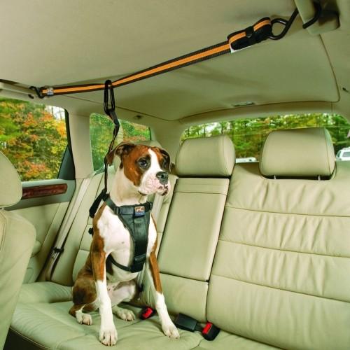Sécurité et protection - Tyrolienne Auto Zipline  pour chiens
