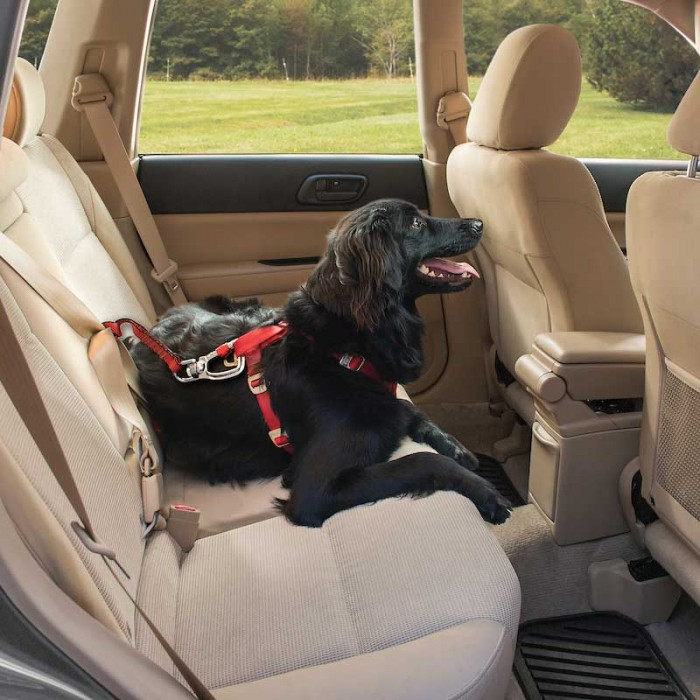 Transport du chien - Sangle d'attache de sécurité Swivel pour chiens