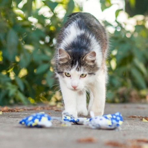 Ventes Privées - Jouet Peluche Petit Animal pour chats