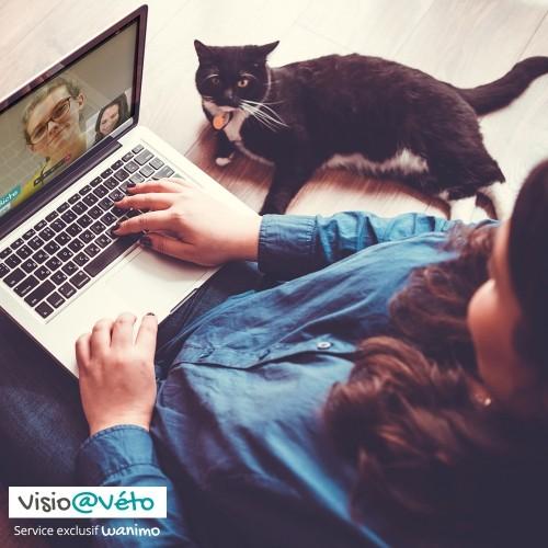 Visio véto - Visio@véto pour chiens