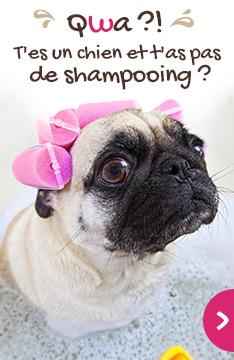 Wite, un shampooing pour mon chien !