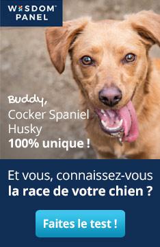 Connaissez-vous la race de votre chien ? Faites le test !