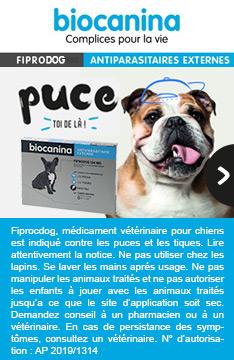 Pipettes Fiprodog pour chien