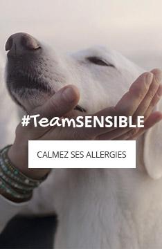 Allergies du chien