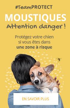 #TeamPROTECT : Protégez votre chien des moustiques !