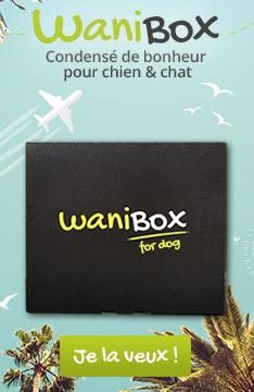 Découvrez la Wanibox love pour chien !