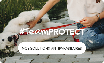 #Team PROTECT : Nos solutions antiparasitaires