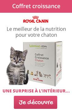 Kit chaton Royal Canin