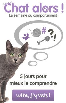 La semaine du comportement du chat : Chat Alors !