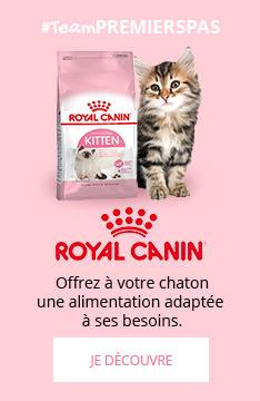 Royal Canin Kitten : une alimentation adaptée aux besoins de votre chaton