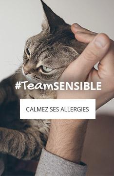 Allergies du chat