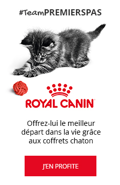 #TeamPREMIERSPAS : Coffret chaton Royal Canin OFFERT