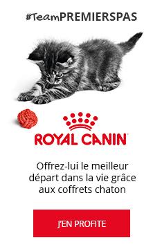 #TeamPREMIERSPAS : Coffret chaton Royal Canin OFFERT