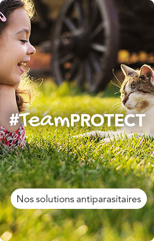 #TeamPROTECT : Nos solutions antiparasitaires