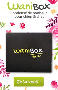 Découvrez nos Wanibox de noel pour chat!