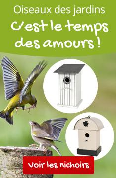 Oiseaux des jardins, c'est la saison de la reproduction