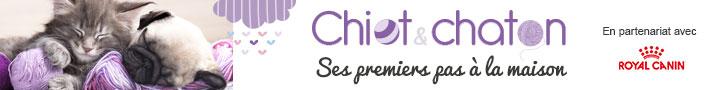 Chiot & chaton : ses premiers pas à la maison
