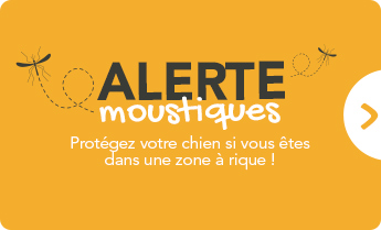 Alerte moustiques : protégez votre chien !