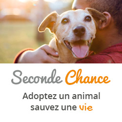 Seconde Chance : adoption d'un animal de compagnie