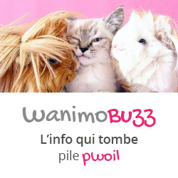Wanimo BUzz : le blog info de Wanimo