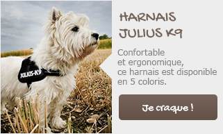 home chien mobile harnais