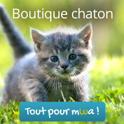 Boutique Chaton