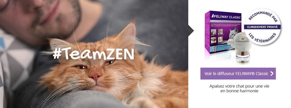 #TeamZEN : apaisez votre chat pour une vie en parfaite harmonie !