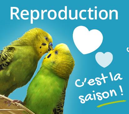reproduction c'est la saison des amours