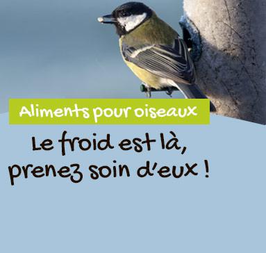 Aidez les oiseaux des jardins!