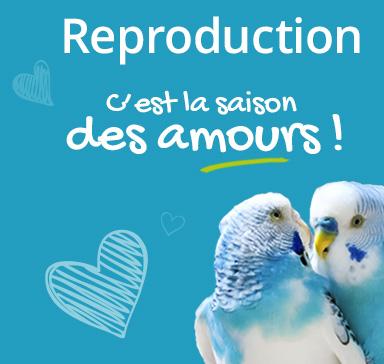 C'est la saison des amours ! Favoriser la reproduction de vos oiseaux