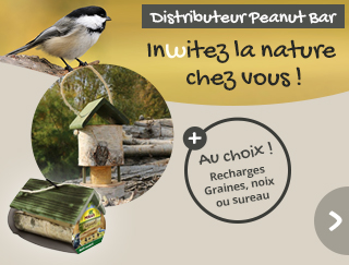 Invitez la nature chez vous avec le distributeur Peanut Bar