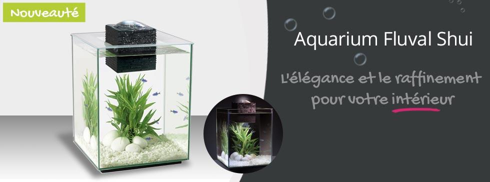 Nouveau Aquarium Shui à découvrir!