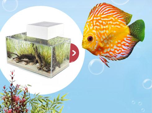 Découvrez l'aquarium Fluval Edge 360°