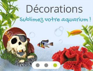 décorations aquarium, explorez notre univers