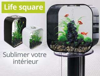 Découvrez la gamme d'aquarium design lifesquare