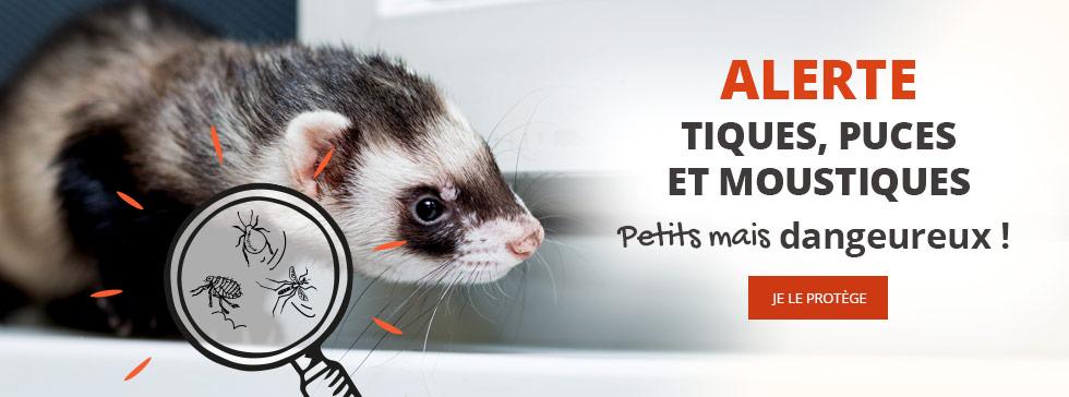Alerte tiques, puces et moustiques ! Protégez-le !