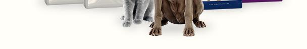 Royal Canin : profitez des best-sellers en promo !