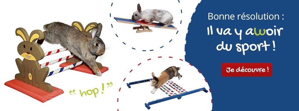 C'est la rentrée : reprenez le sport avec l'agility pour lapin