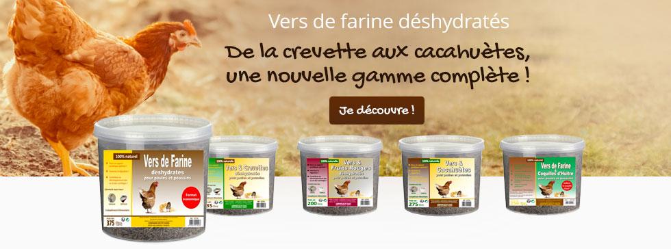 Découvrez nos gammes de vers de farine pour vos poules