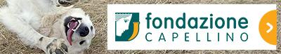 En savoir + sur la Fondazione Capellino
