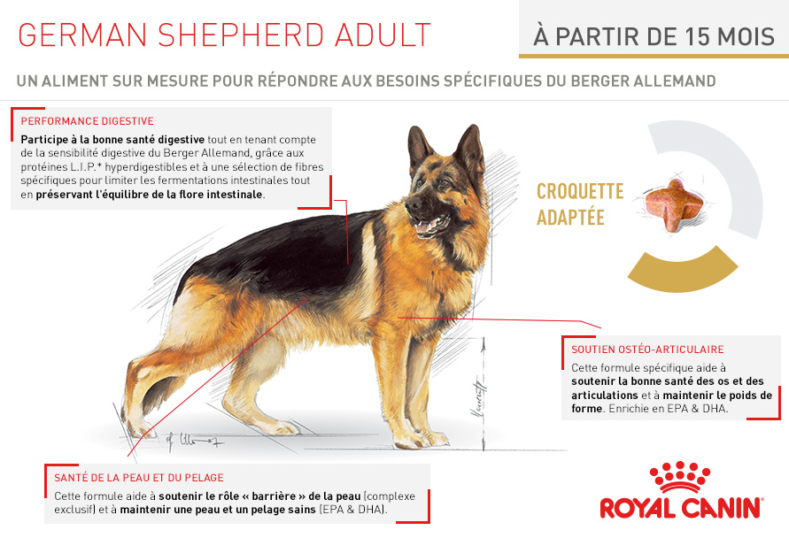 royal canin breed nutrition croquettes pour chien berger allemand adulte german shepherd