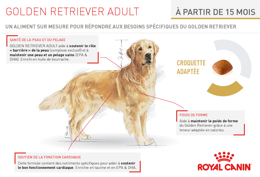royal canin breed nutrition croquettes pour chien golden retriever wanimo. Black Bedroom Furniture Sets. Home Design Ideas