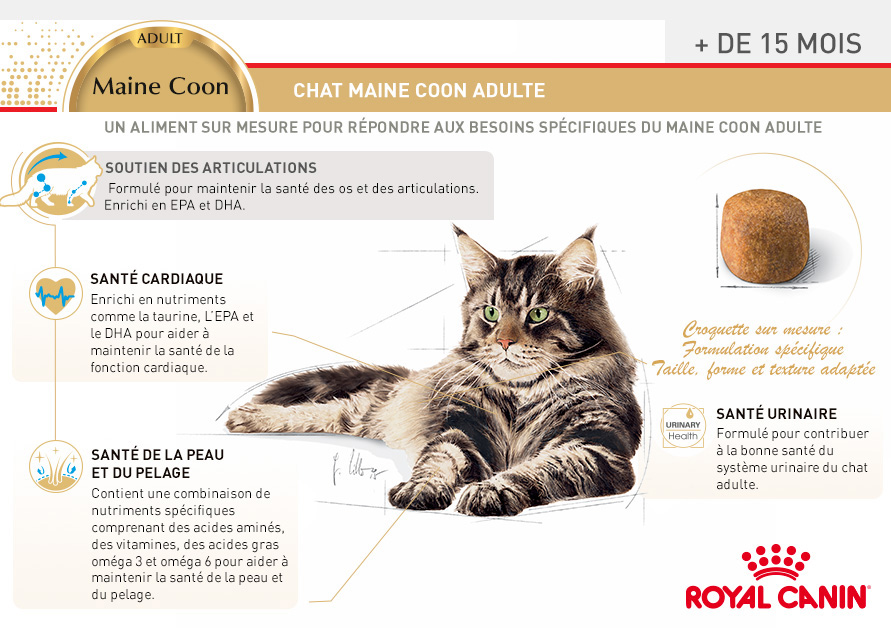 royal canin breed nutrition croquettes pour chat maine coon 31 wanimo. Black Bedroom Furniture Sets. Home Design Ideas