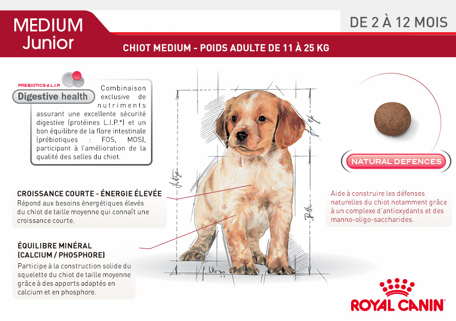royal canin size nutrition croquettes pour chien medium junior wanimo. Black Bedroom Furniture Sets. Home Design Ideas
