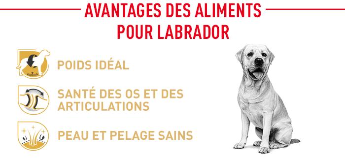 Avantages des croquettes pour votre labrador